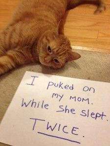 catshaming2 Gotta love some good old fashioned cat shaming –