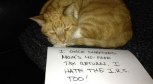 Funny Cat Shaming