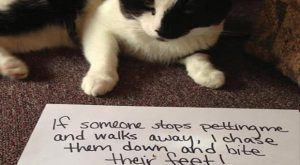 The Best Of Cat Shaming –