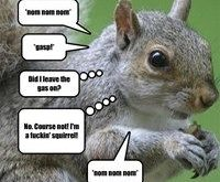 Even Squirrels Quote Eddie Izzard