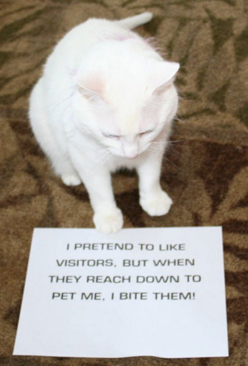 funny cat shaming 3 Now its the cats turn to be shamed (25 Photos)