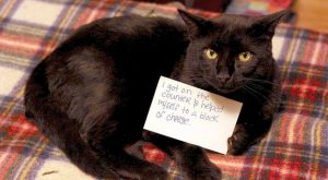 Cat-Shaming At Its Best – This one actually looks like it's holding the sign.…