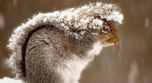 """Love Quotes : Squirrel in Snow by Ray Yeager, nationalgeographic #Squirrel """" #Squirrel…"""