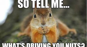 Image result for squirrel quotes