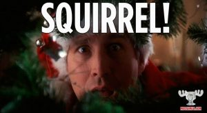 Christmas Vacation Squirrel Quote Squirrel Christmas Vacation Quote Classic Movie Christmas