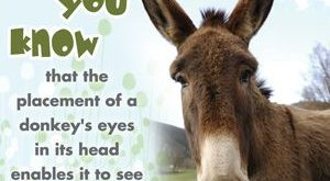 DONKEYS QUOTES – Google Search