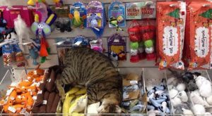 This little guy just found cat heaven…