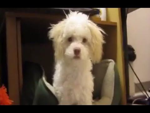 This Puppy Just Got Caught Eating Paper And Her Reaction Is Beyond Hilarious -…