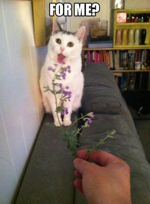 "Aww, so cute! ""For me?"" Cat receiving a flower stem!"