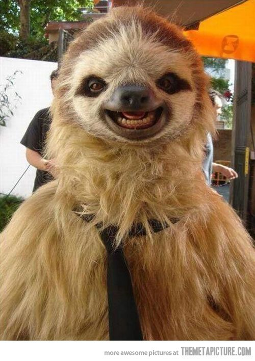 A very photogenic sloth& #; (Hay sloth, Is there the person called Chewbacca as…