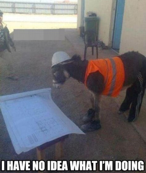 Funny Donkey Mission Impossible Have No Idea What Hes Doing