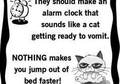 "Image result for funny cat people quotes #catsfunnysayings "" #catsfunnysayings"