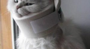 Mythbusters were right, poor kitty cat