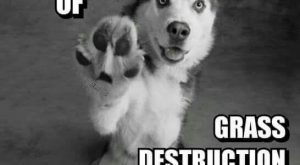 "Siberian Husky owners know how true this is!! #siberianhusky "" #siberianhusky"