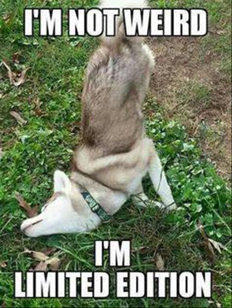 "Funny Animal Picture Dump Of The Day 27 Pics #dogsfunnybaby explore Pinterest""> #..."
