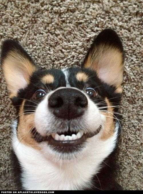 pictures of smiling pets | Smiling dog. | Pets
