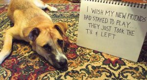 Very Funny Dog Shaming – 15 Pics