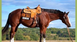 "List your horse, sheep or tack for free on #freelisting search Pinterest"" #freelisting #pastureroad…"