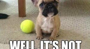 Its not going to throw itself funny quotes memes quote dog meme lol funny…