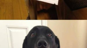 Dogs.: