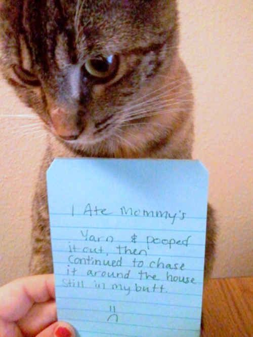 You will never cat shame them