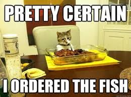 """#catsmemes """" #catsmemes,funny animal pictures, cat memes, #cats """" #cats, #funnycatsjust explore…"""