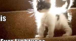 "funny animals pictures with captions ( pict) | Funny Pictures #compartirvideos search Pinterest"" #compartirvideos…"