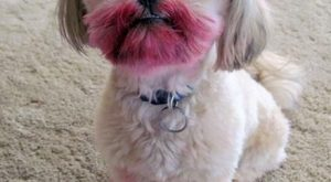 Funny Dog Pictures with Captions   Doggie Funnies! And some cat-stuff, too « Motley…
