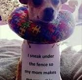 dogs shaming