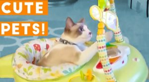 Cutest Pets of the Week Compilation April    Funny Pet Videos