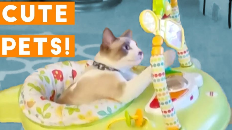 Cutest Pets of the Week Compilation April  | Funny Pet Videos
