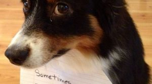 dog_shaming_AAK
