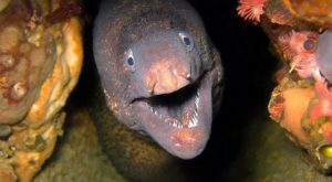 Proof That Eels Are The Cutest Animals Ever