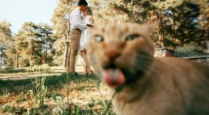 The Funniest Accidental Wedding Photobombs