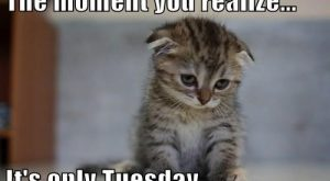 The Moment You Realize, It's Only Tuesday tuesday tuesday quotes happy tuesday tuesday quote…