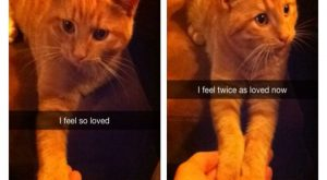 Funny Animal Pictures You Should See If You Need A Good Laugh