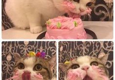 This princess enjoying her birthday cake. | Just  Really, Really Cute Pictures Of…