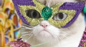 Throw Me Something! No! grumpy cat festive mardi gras happy mardi gras happy mardi…