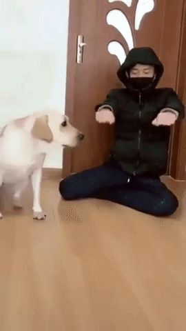 GIF dog and master. amazing synchrony