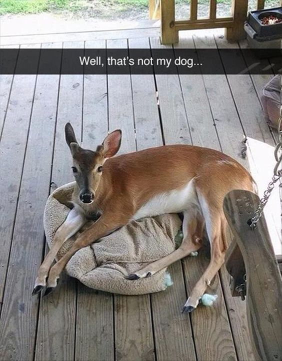 Hilarious Animal Pictures
