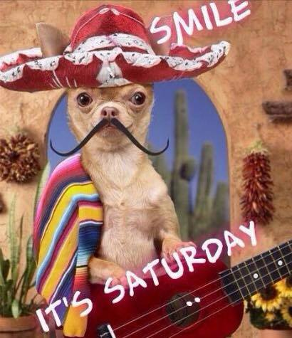 "Smile, It's Saturday! #saturday "" #saturday funny saturday saturday quotes sombrero mustache chihuahua…"