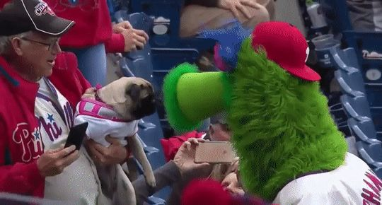 Pug gets its mind blown!Funny memes,funny,funny pictures,funny gif,funny texts,funny minion quotes,pics and much #gif…