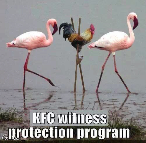 KFC protection witness plan LOL Not working too good for the chickens today -…