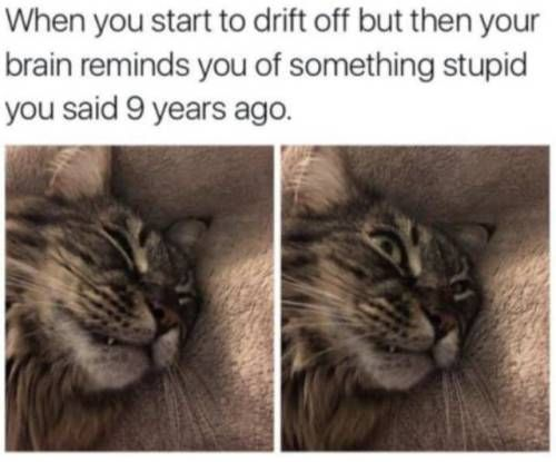 Animal Memes That Will Make Your Day
