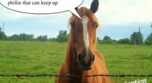Funny Horse Pictures with Captions   Funny Horse  is rare collection of funny…