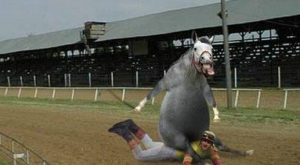 Funny horses   … ,see a picture or photograph of Funny Horse funny. Funny…