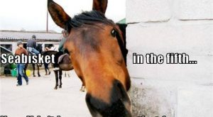 horse pictures with captions | Download Very Creative and Funny Horse Images