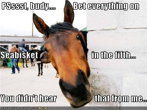 horse pictures with captions   Download Very Creative and Funny Horse Images