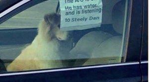 FB photo shared reminder by dad for he wants Steely Dan CD's sometime