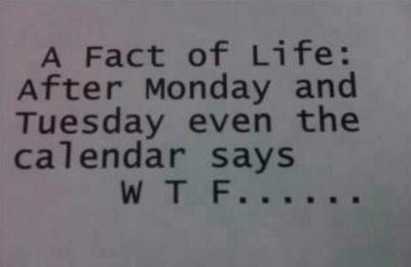 funny quote images about monday | calendar, fact, funny, monday, quote – inspiring picture…